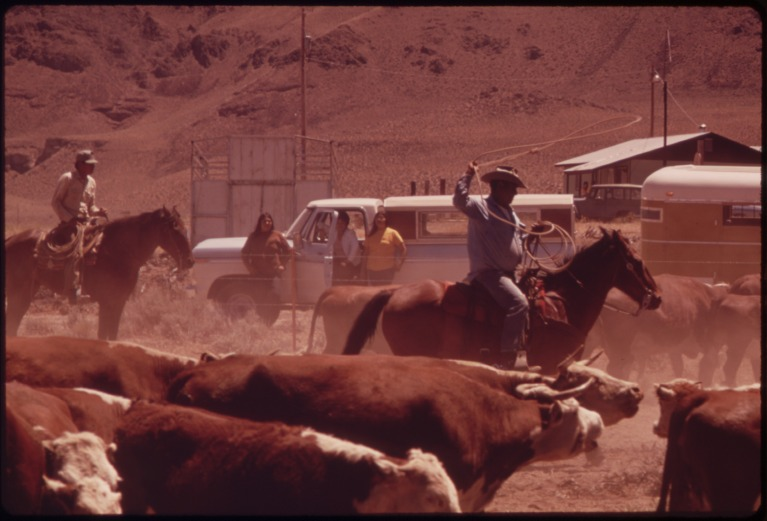 SPRING_ROUNDUP_OF_PAIUTE-OWNED_CATTLE_BEGINS_AT_SUTCLIFFE_PYRAMID_LAKE_INDIAN_RESERVATION._CORALLING_AND_BRANDING_IS..._-_NARA_-_553104